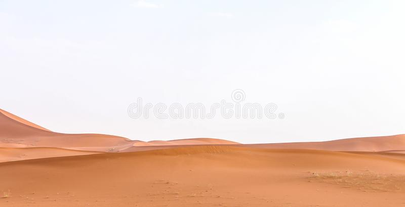 Woestijn met sommige kamelen stock fotografie