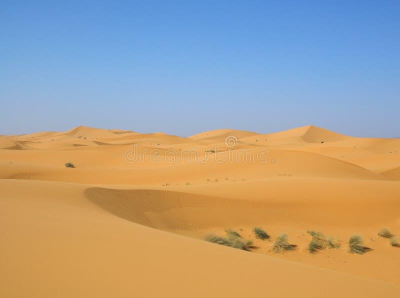 Woestijn na regen stock afbeeldingen
