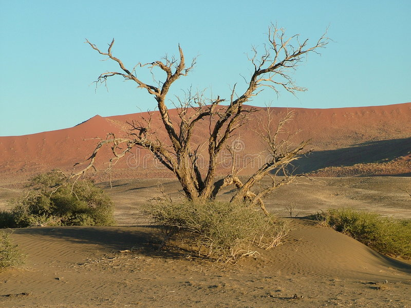 Woestijn Namibië royalty-vrije stock afbeeldingen