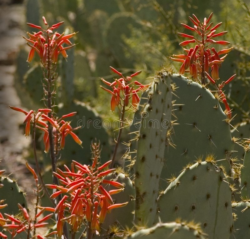 Woestijn Wildflowers royalty-vrije stock fotografie
