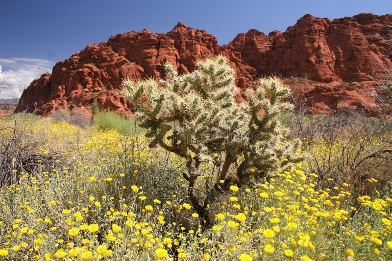 Woestijn Wildflowers en Cactus stock afbeelding