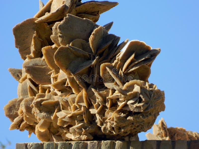 Woestijnbloem! U zult het in de woestijn van de Sahara vinden royalty-vrije stock foto