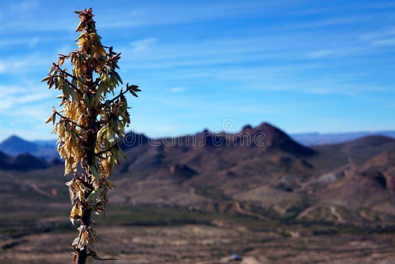 Woestijnbloem voor Bergen stock foto's