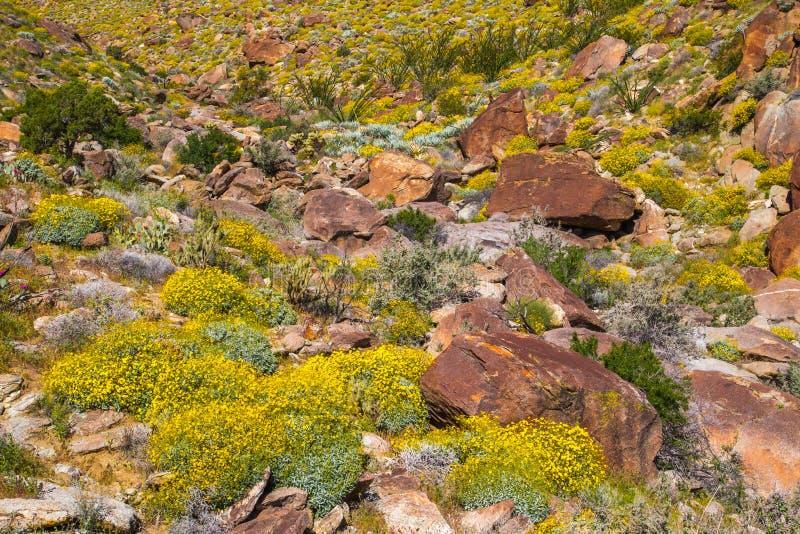 Woestijnbloemen stock afbeelding