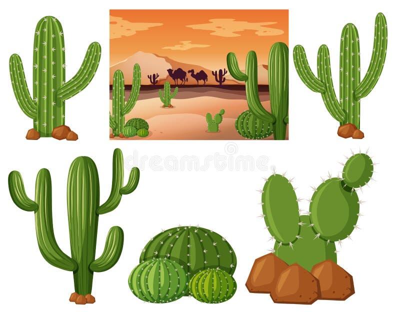 Woestijngebied met cactusinstallaties vector illustratie