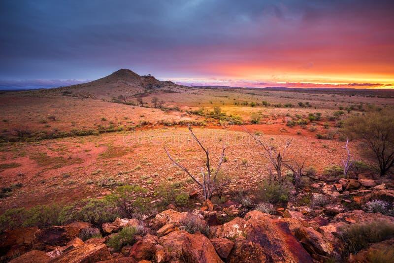 Woestijnglorie stock afbeeldingen