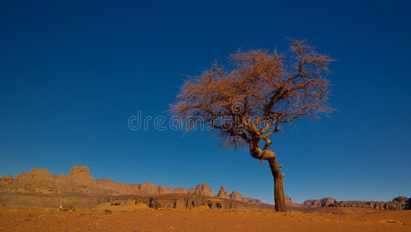 Woestijnlandschap met Acacia in de vallei van Moul Naga bij in het nationale park van Tassili nAjjer in Algerije royalty-vrije stock foto's
