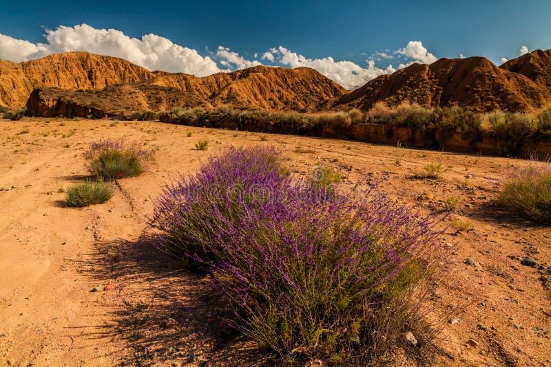 Woestijnlandschap met bloeiende struiken arizona royalty-vrije stock afbeelding