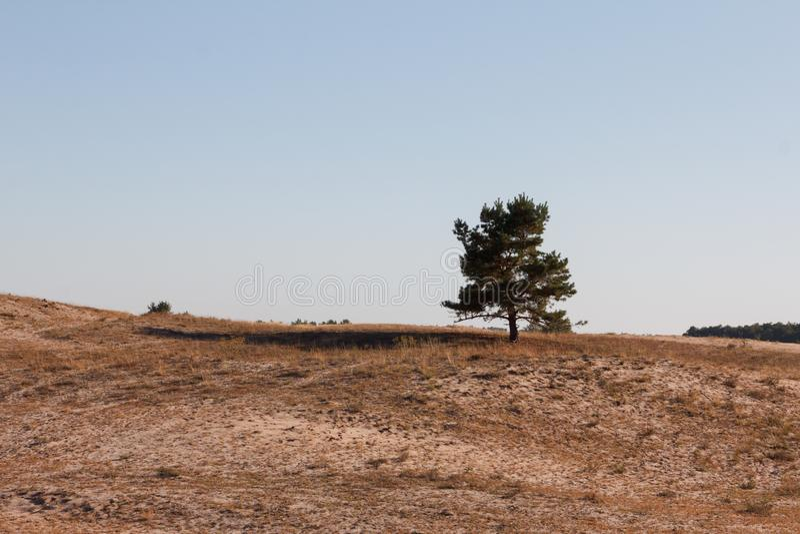 Woestijnlandschap met duinen stock afbeelding