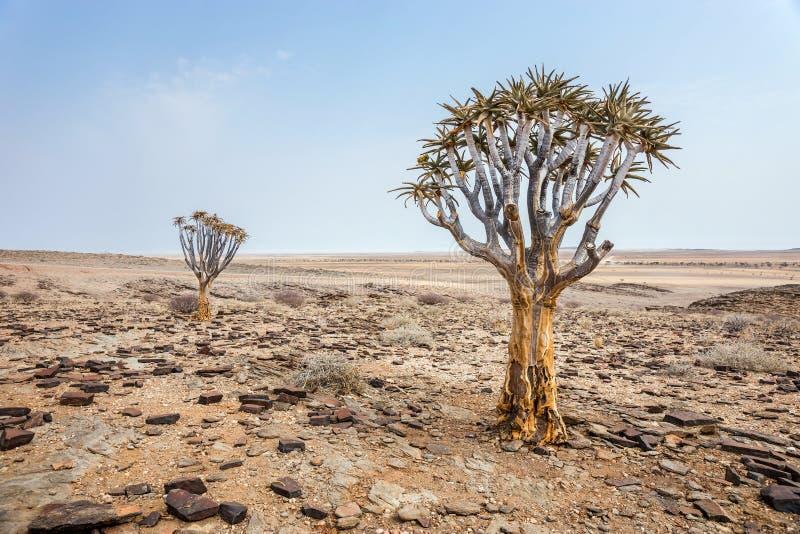 Woestijnlandschap met quiver bomen stock fotografie