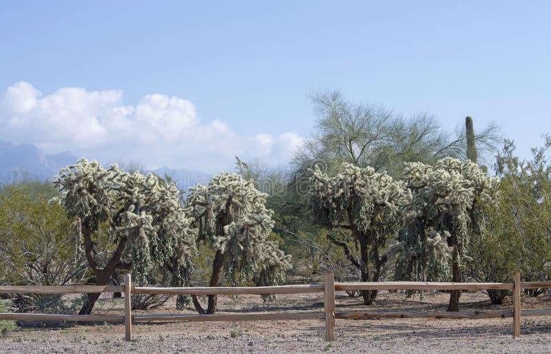 Woestijnmening met houten omheining in de voorgrond stock afbeeldingen