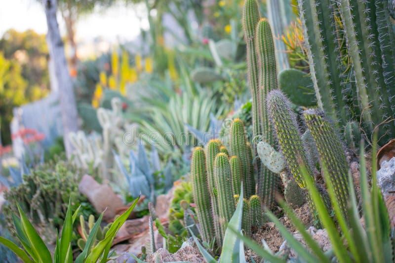 Woestijntuin met succulents stock afbeelding