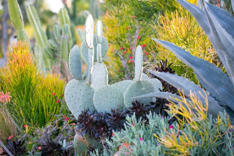 Woestijntuin met succulents royalty-vrije stock afbeelding