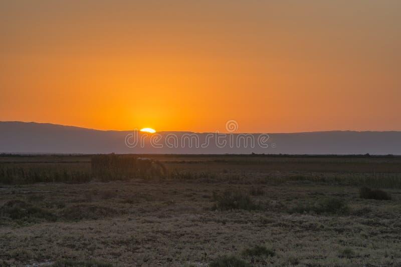 Woestijnzonsopgang stock fotografie