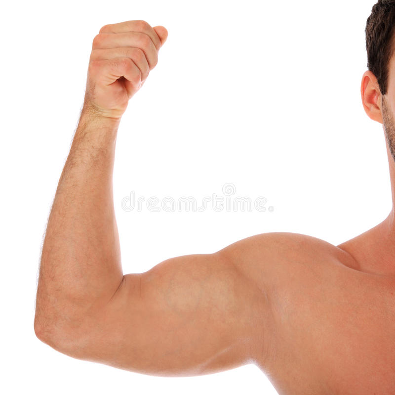 Wohler Mit Muskeln Männlicher Arm Stockfoto - Bild von training ...
