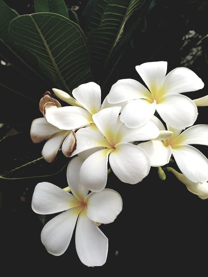 Wohlriechendes schönes der Blume lizenzfreie stockfotografie