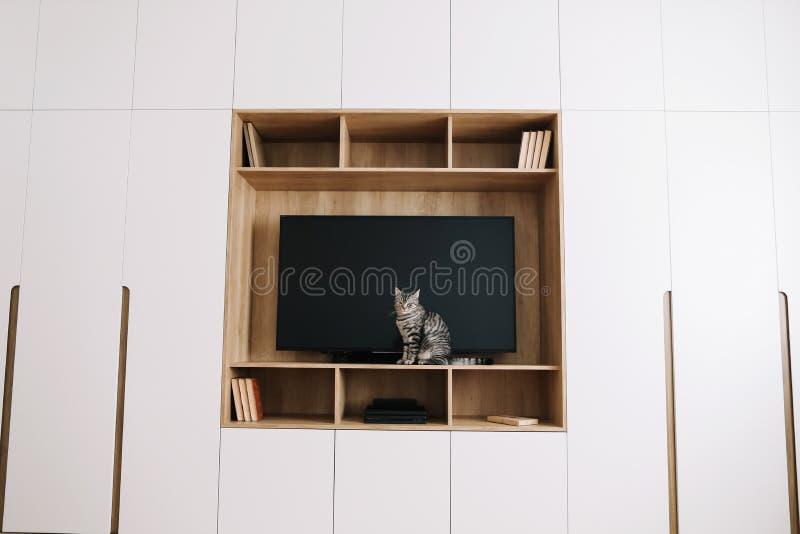 Wohnzimmerinnenraum mit Fernsehen auf hölzerner Wand und einer Garderobe skandinavische Art, minimales Konzept Lustige Katze im m stockbilder
