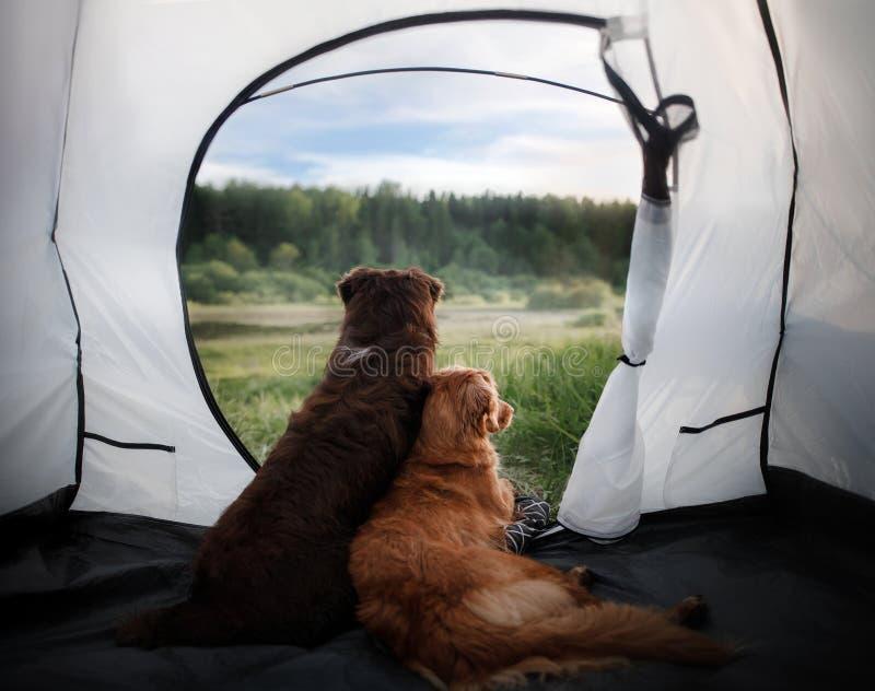 Wohonden in een tent op aard De vakantie van de zomer royalty-vrije stock afbeelding