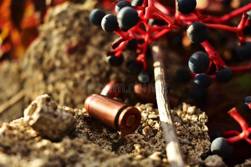Wojna i natura! Życie i śmierć! zdjęcie stock