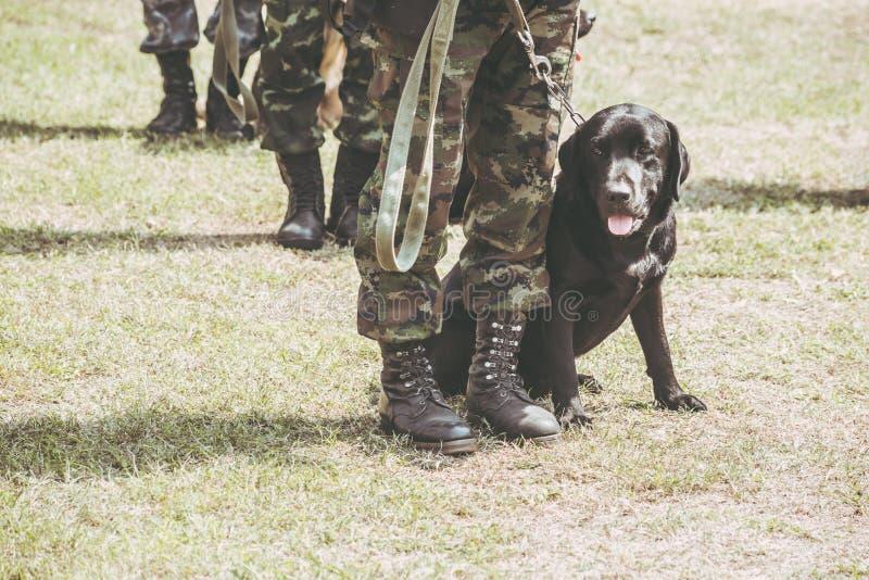 Wojskowego psi szkolenie dla pomoc żołnierzy antego terrorysty obraz stock