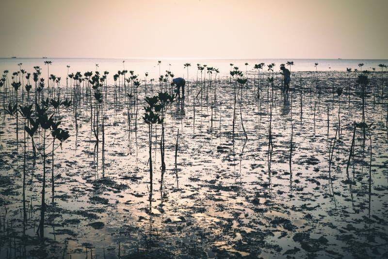 Wok Tum, Hin Kong, Plai Lem plaży bagna z namorzynowym lasem przy Koh Pha ngan wyspy dennego brzeg nabrzeżne terenem przy niskim  obrazy royalty free