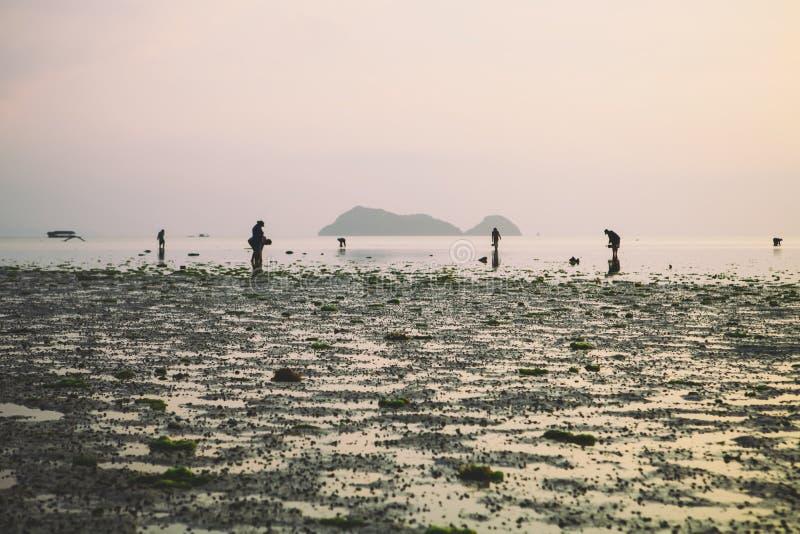 Wok Tum, Hin Kong, Plai Lem plaży bagna z namorzynowym lasem przy Koh Pha ngan wyspy dennego brzeg nabrzeżne terenem przy niskim  zdjęcia royalty free