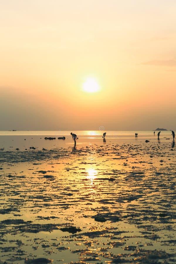 Wok Tum, Hin Kong, Plai Lem plaży bagna z namorzynowym lasem przy Koh Pha ngan wyspy dennego brzeg nabrzeżne terenem przy niskim  obrazy stock