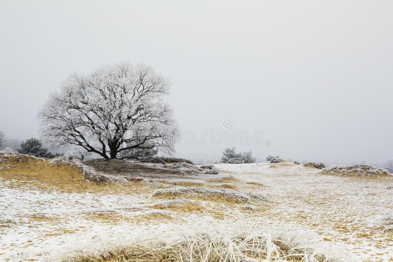 Wold Natuurgebied Drents-Friese, Naturreservat Drents-Friese Wo lizenzfreies stockbild