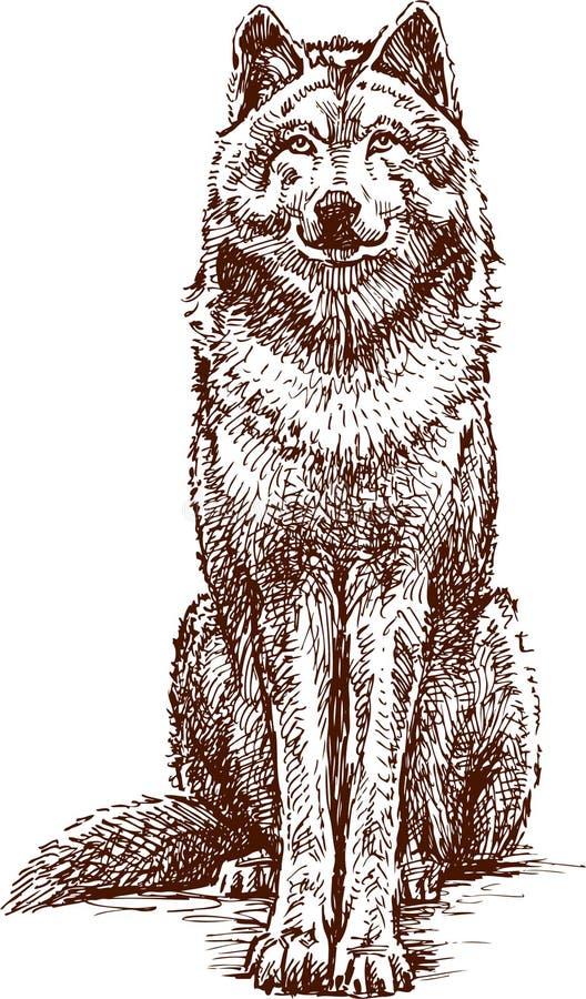 Free Wolf Stock Photo - 25194300