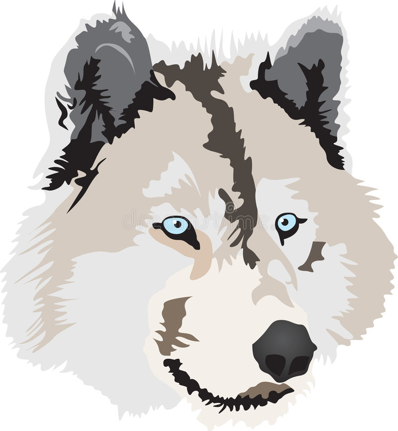 Wolf royalty free illustration