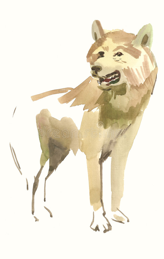Wolf. Watercolor of a wolf. White background stock illustration