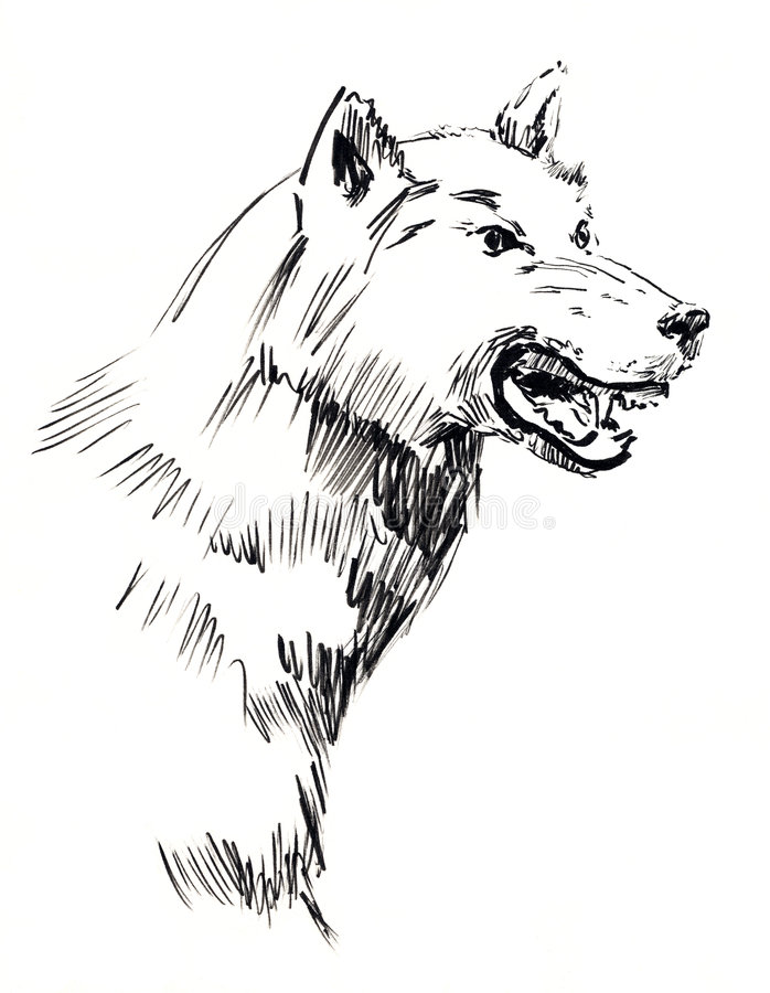 Wolf (Canis lupus) stock illustration