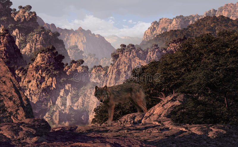 Wolf In The Canyon stock photography