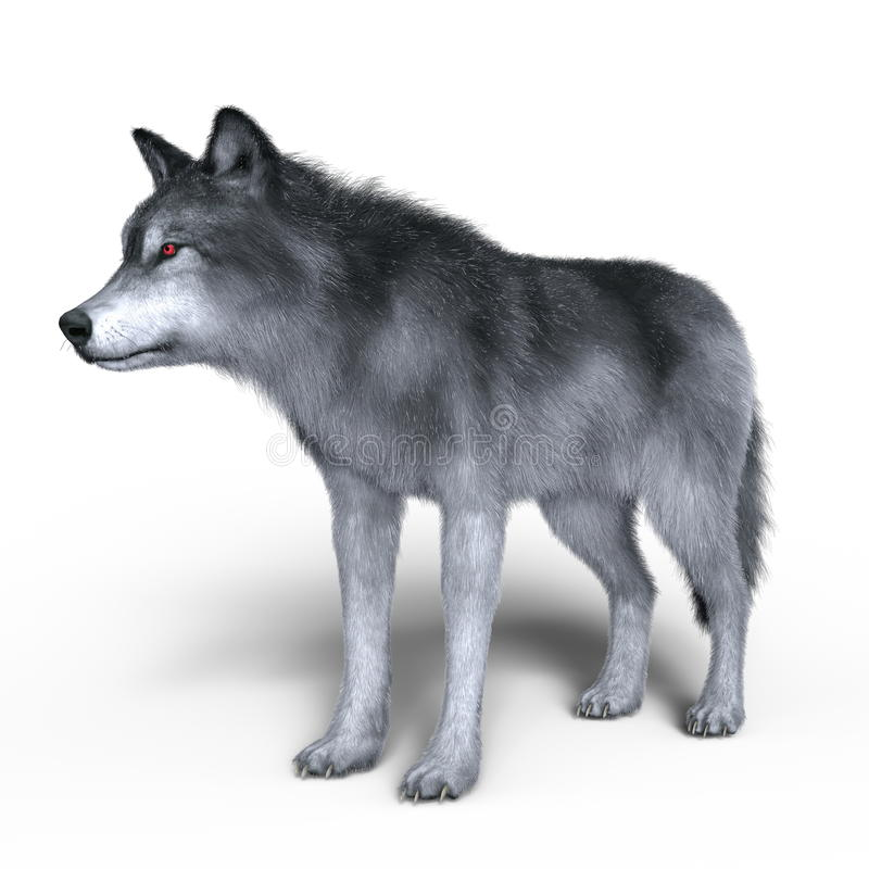 Wolf. 3D CG rendering of a wolf stock illustration