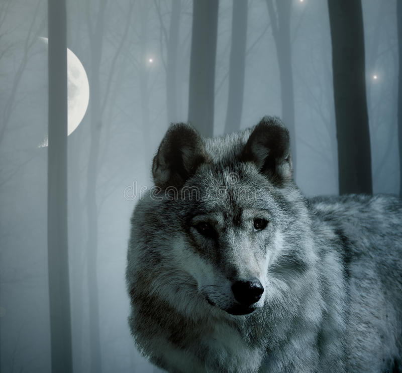 Wolf in the dark forest royalty free stock photos