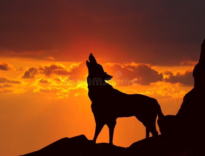 Wolf die bij zonsondergang huilt royalty-vrije stock afbeeldingen