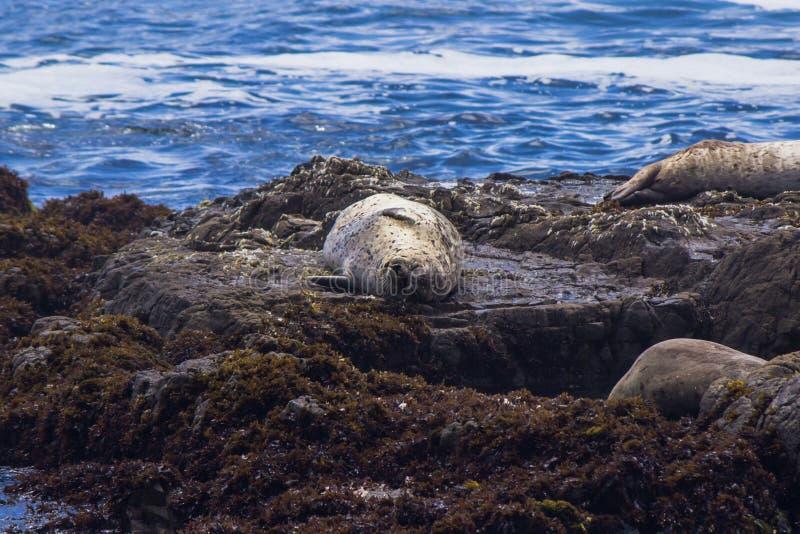 wolf för hav 2 fotografering för bildbyråer