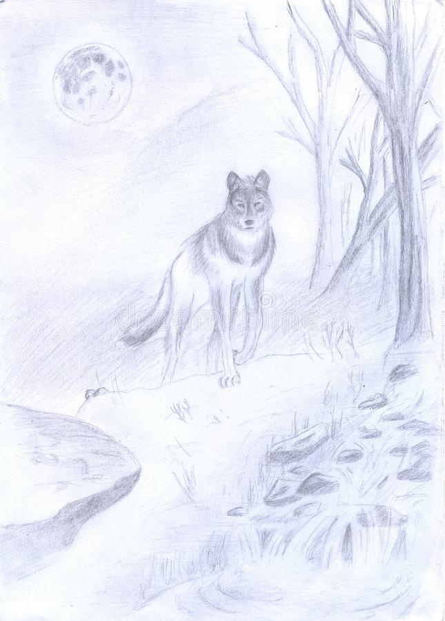 Download Wolf in the forest stock illustration. Illustration of wild - 27989793