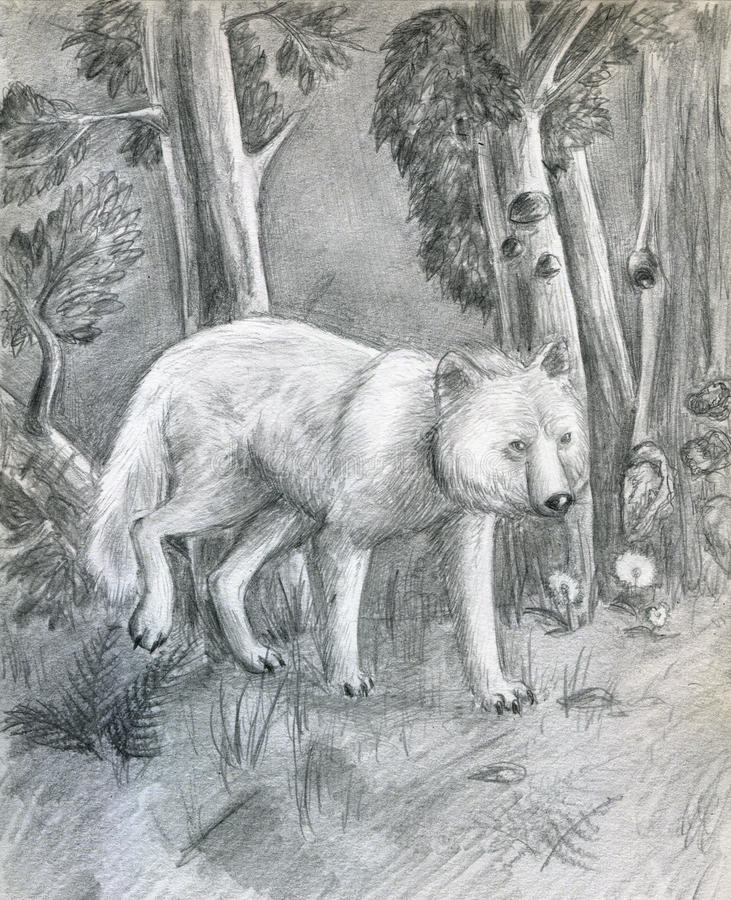 Download Wolf In The Forest - Sketch Stock Illustration - Image: 10441498
