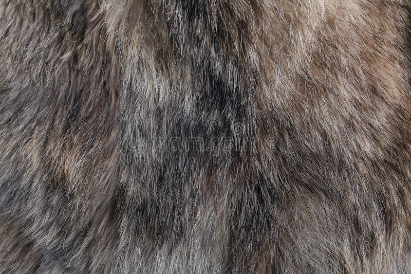 Wolf fur texture natural royalty free stock photography