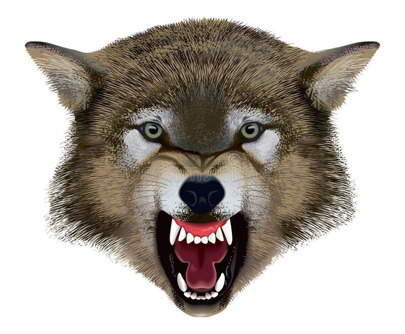 Wolf Head. Illustration. stock photography