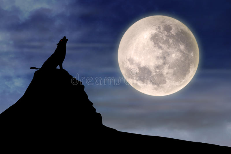 Wolf howling at full moon 1. Vector silhouette illustration of wild wolf howling against the sky with full moon rising behind royalty free illustration
