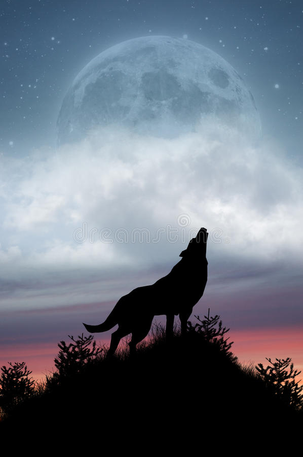 Wolf Howling at Full Moon. Silhouetted wolf in countryside howling at full moon with stars and sunset background stock illustration