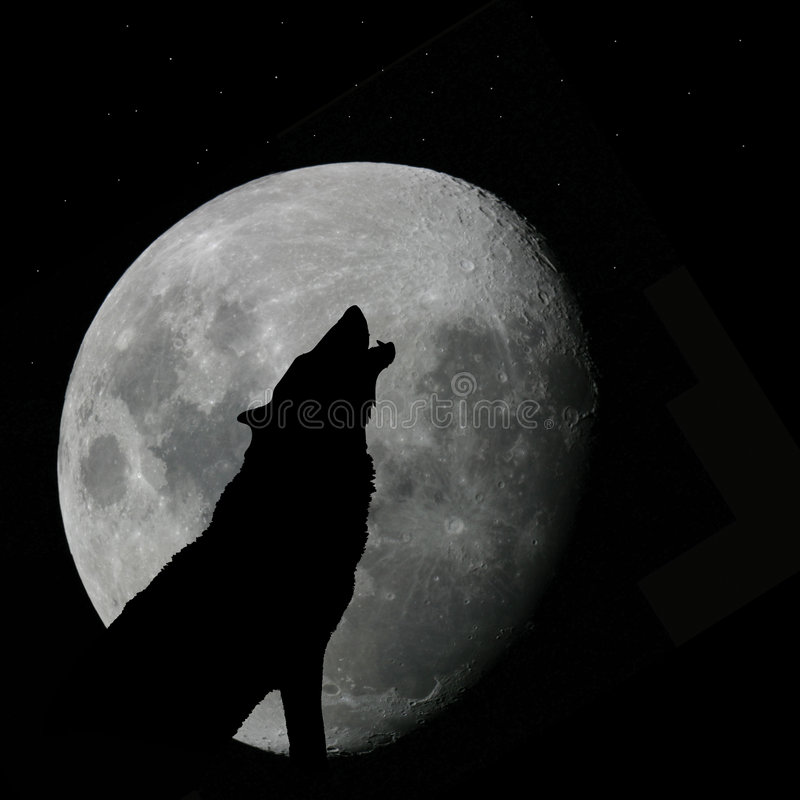 Wolf howling at full moon. Vector silhouette illustration of wild wolf howling against the sky with full moon rising behind
