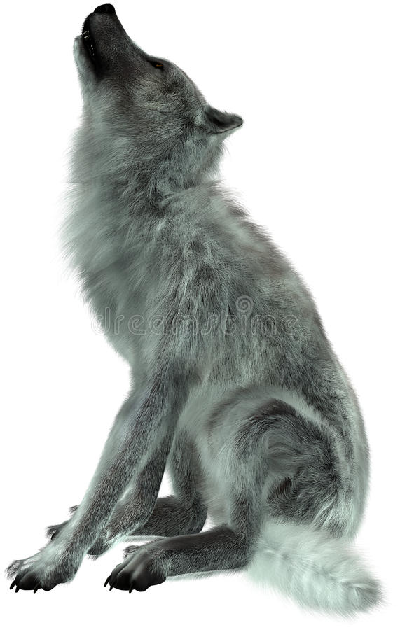 Wolf Howling Illustration Isolated. Illustration of a white or grey wolf howling. The wildlife animal is isolated on white stock image
