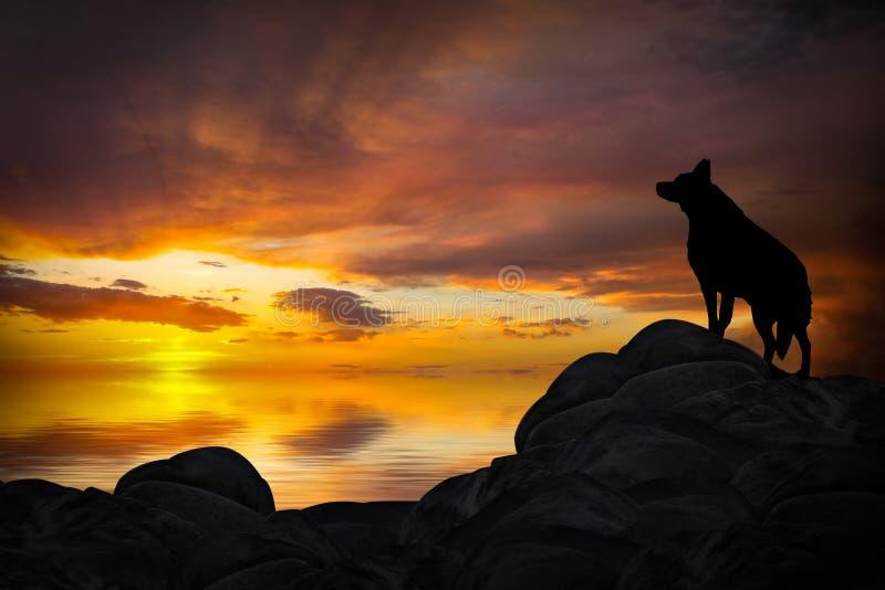 Wolf Howling im Sonnenuntergang lizenzfreie abbildung