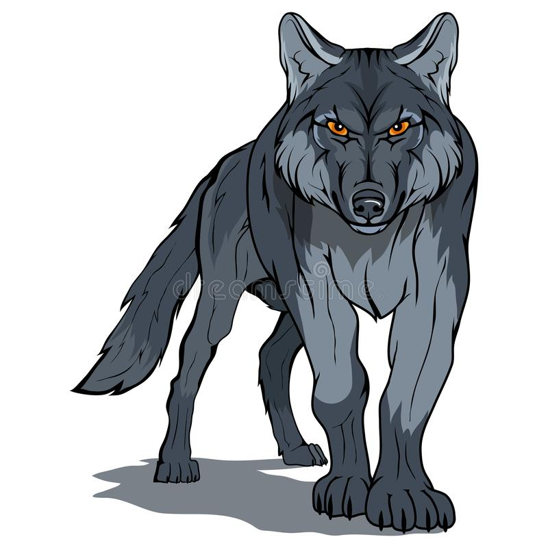 Wolf, isolated on white background, colour illustration, suitable as logo or team mascot, dangerous forest predator, wolf`s head,. Wild animal, gray wolf in stock illustration
