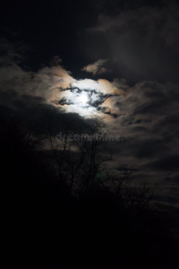Wolf Moon lleno foto de archivo libre de regalías