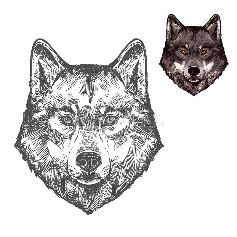 Wolf muzzle vector isolated sketch animal. Wolf wild animal sketch vector icon. Wild gray or timber wolf muzzle symbol for wildlife fauna and zoology or hunting stock illustration