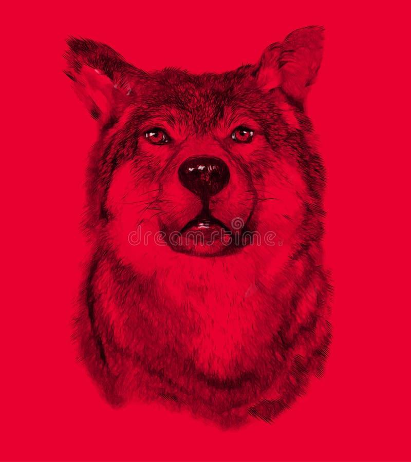 Wolf op rode achtergrond De illustratie trekt binnen stock foto